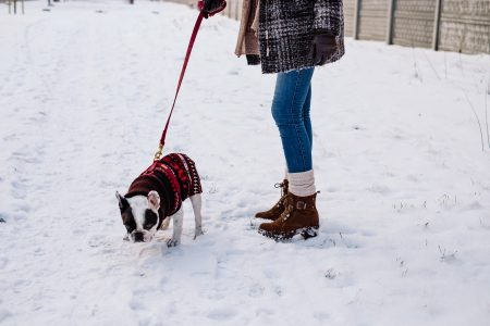 A female walking a french bulldog out in the snow - free stock photo