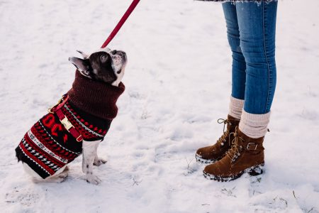 A female with a french bulldog out in the snow 2 - free stock photo