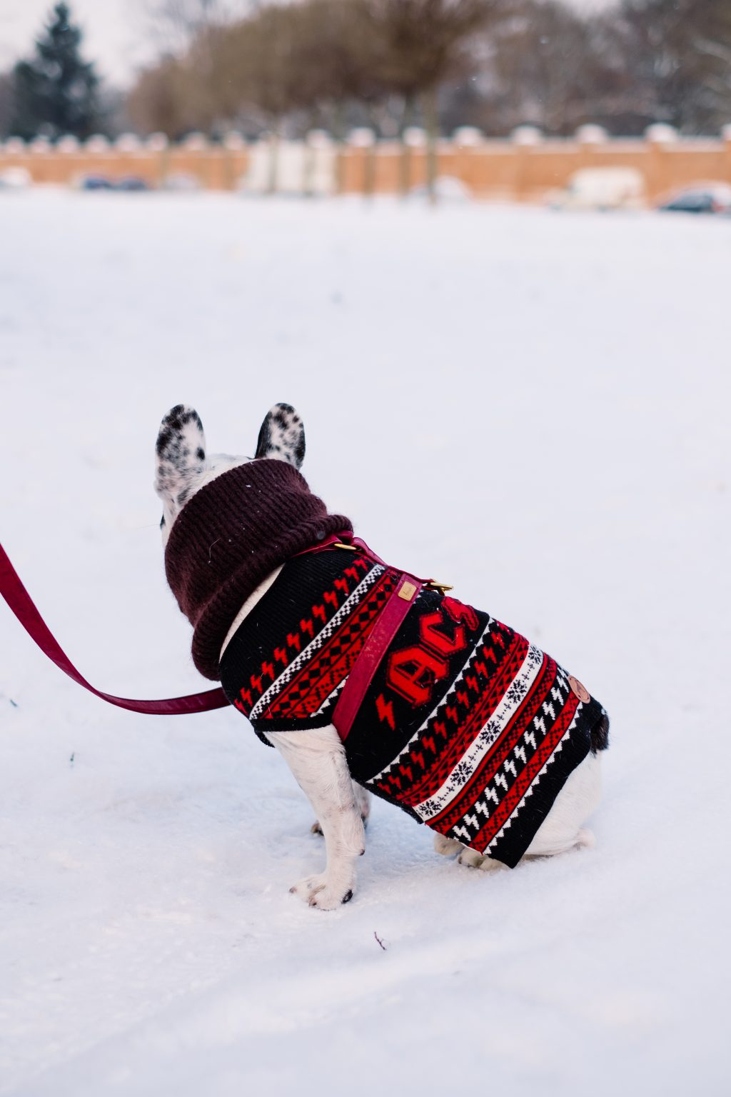 A french bulldog wearing a sweater out in the snow 2 - free stock photo
