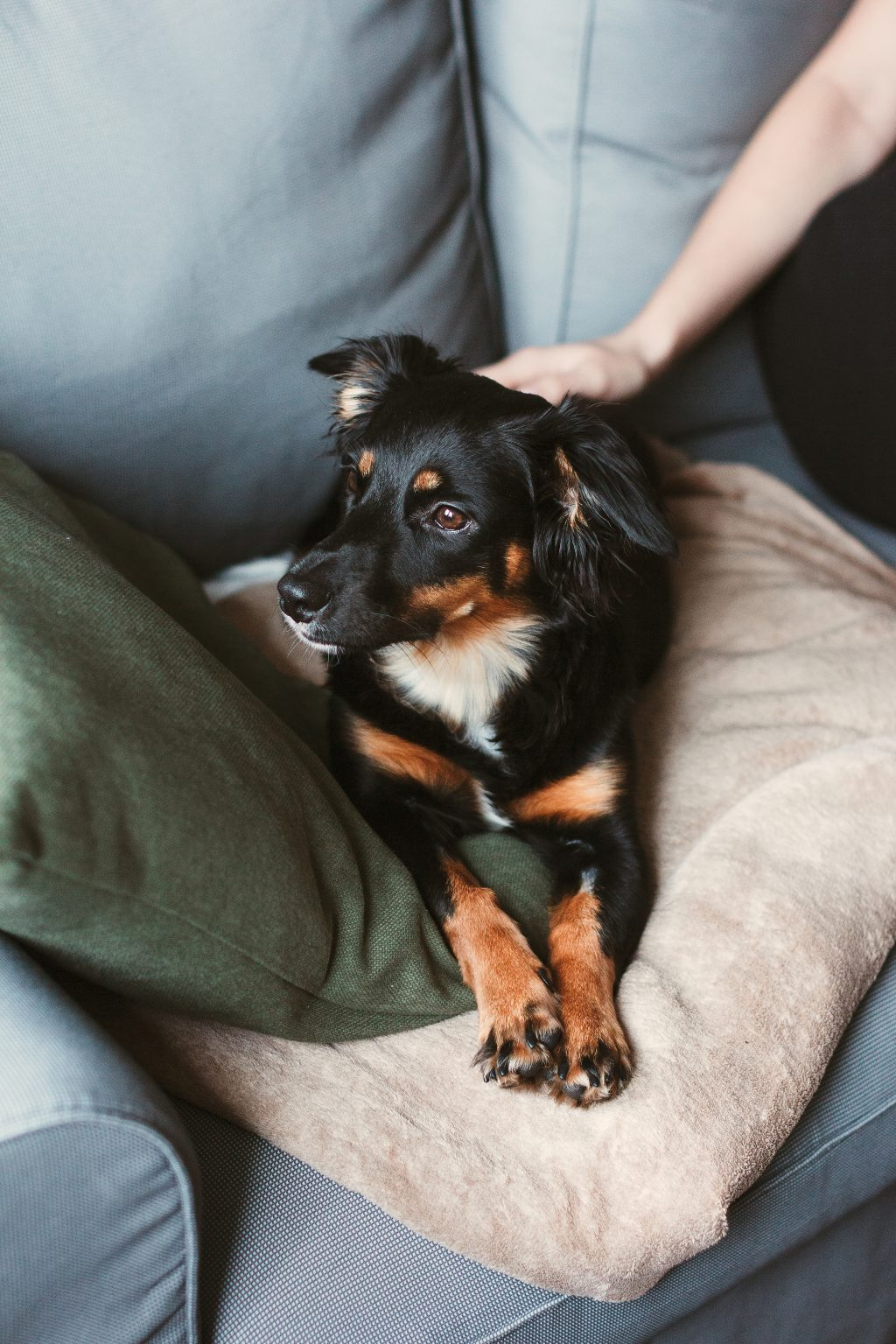 Mixed breed dog lying on the sofa - free stock photo