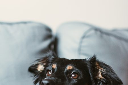 Mixed breed dog lying on the sofa 2 - free stock photo
