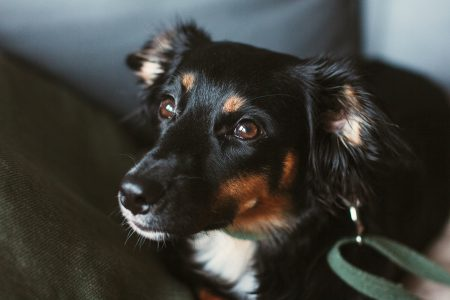 Mixed breed dog lying on the sofa 4 - free stock photo