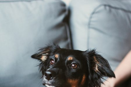 Mixed breed dog lying on the sofa 6 - free stock photo
