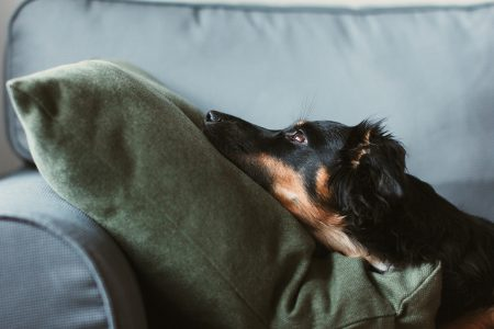 Mixed breed dog lying on the sofa 7 - free stock photo