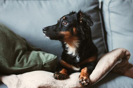 Mixed breed dog lying on the sofa 8 - free stock photo