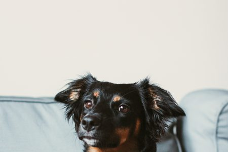 Mixed breed dog lying on the sofa 9 - free stock photo