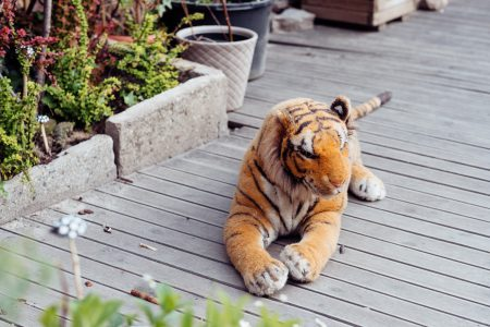 Big plush tiger toy on a wooden terrace - free stock photo