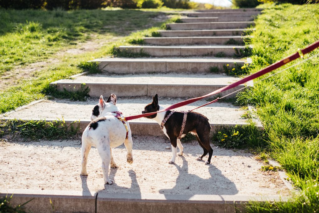 Dogs on a walk in the park - free stock photo