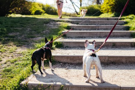 Dogs on a walk in the park 2 - free stock photo