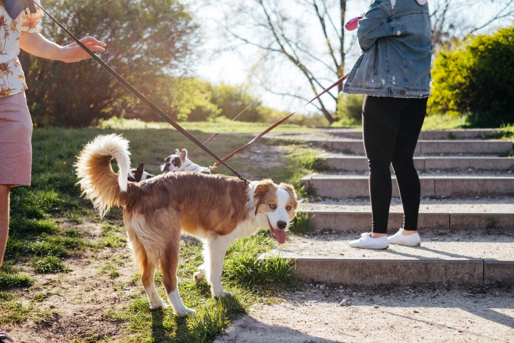 Dogs on a walk in the park 3 - free stock photo