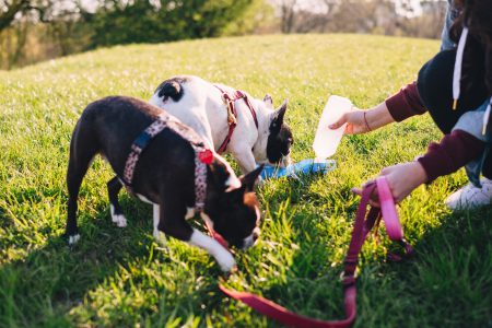 Dogs on a walk in the park 4 - free stock photo