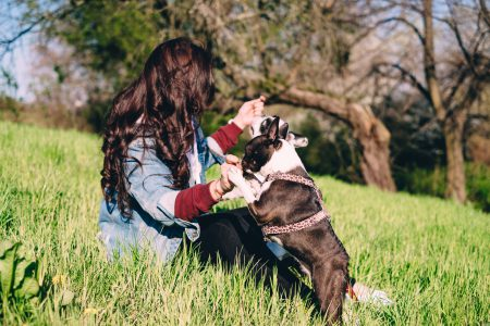 A female playing with two dogs in the park - free stock photo