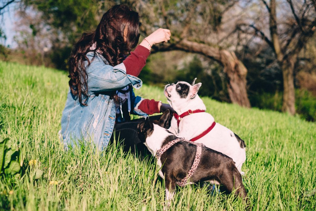 A female playing with two dogs in the park 2 - free stock photo
