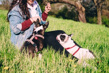 A female playing with two dogs in the park 3 - free stock photo