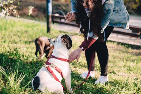 A female playing with two dogs in the park 4 - free stock photo