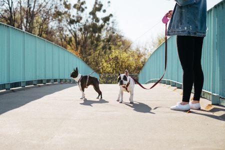 A female walking two dogs in the city - free stock photo