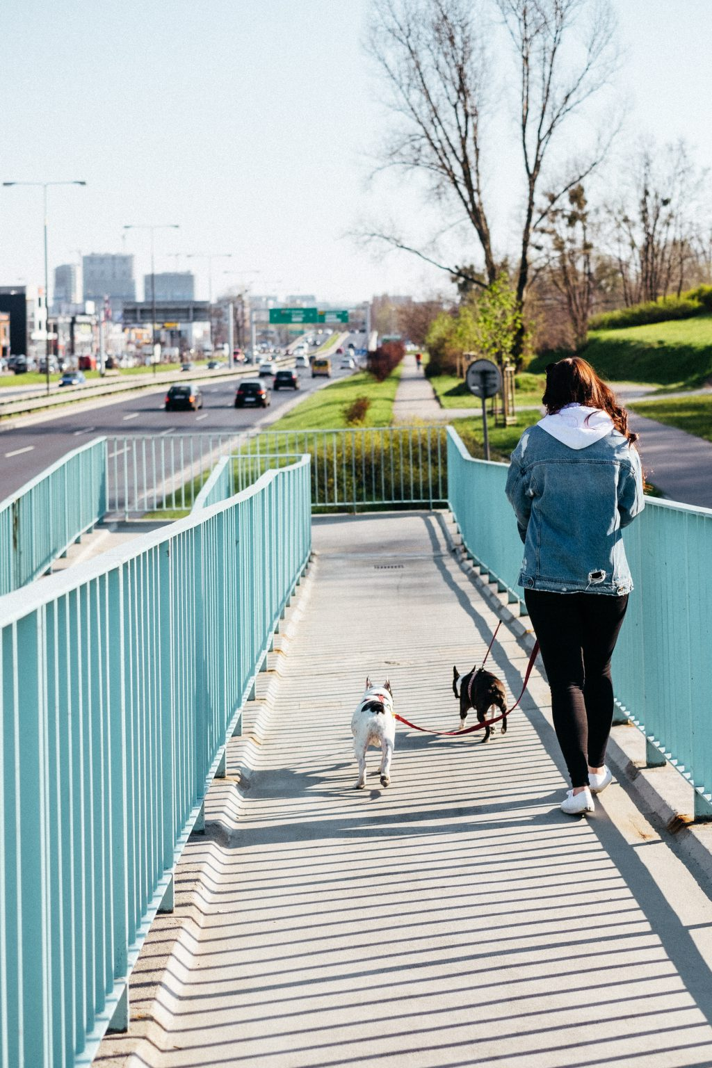 A female walking two dogs in the city 2 - free stock photo