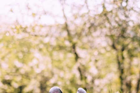 French Bulldog posing on a walk in the park 2 - free stock photo