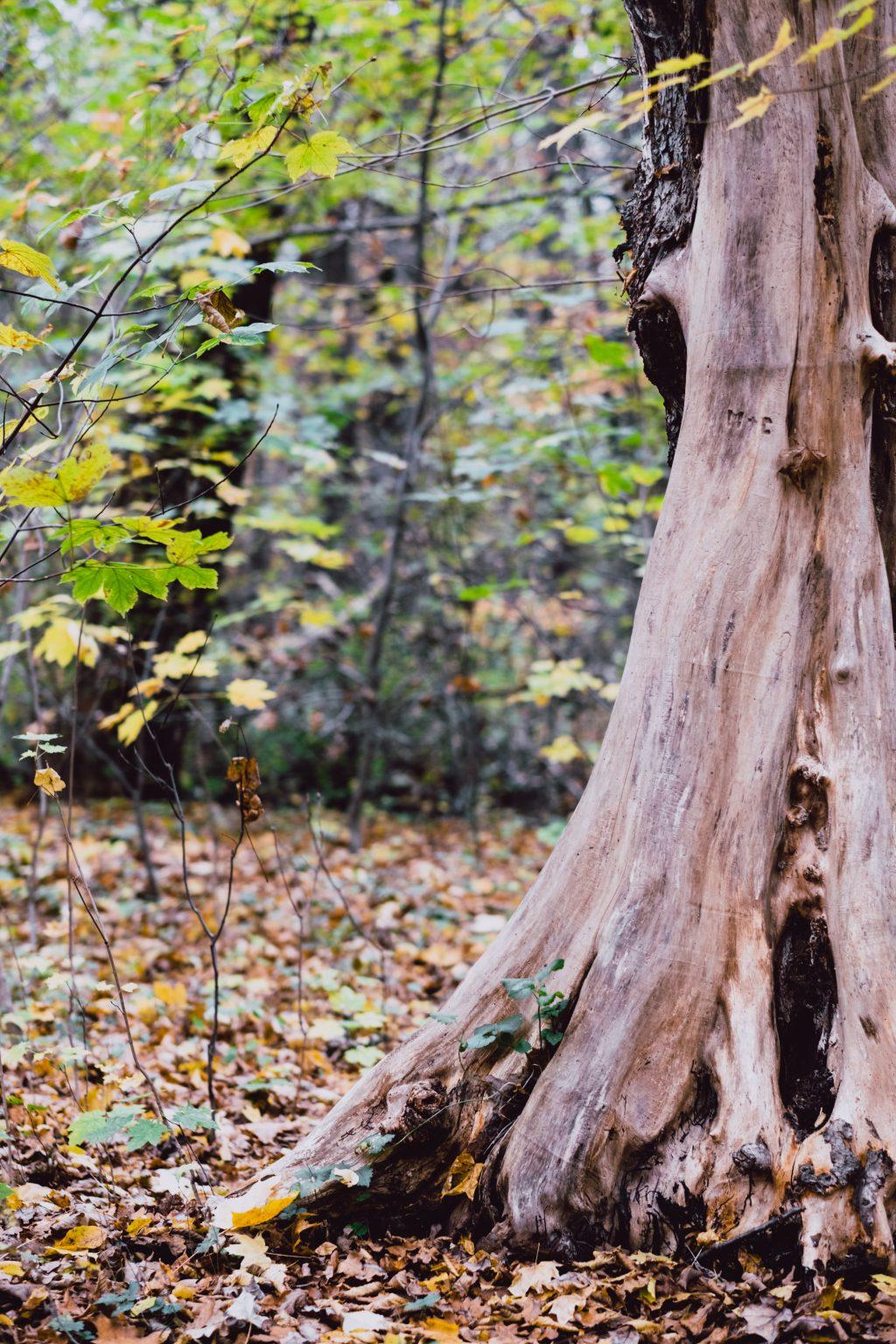 Autumn forest - free stock photo