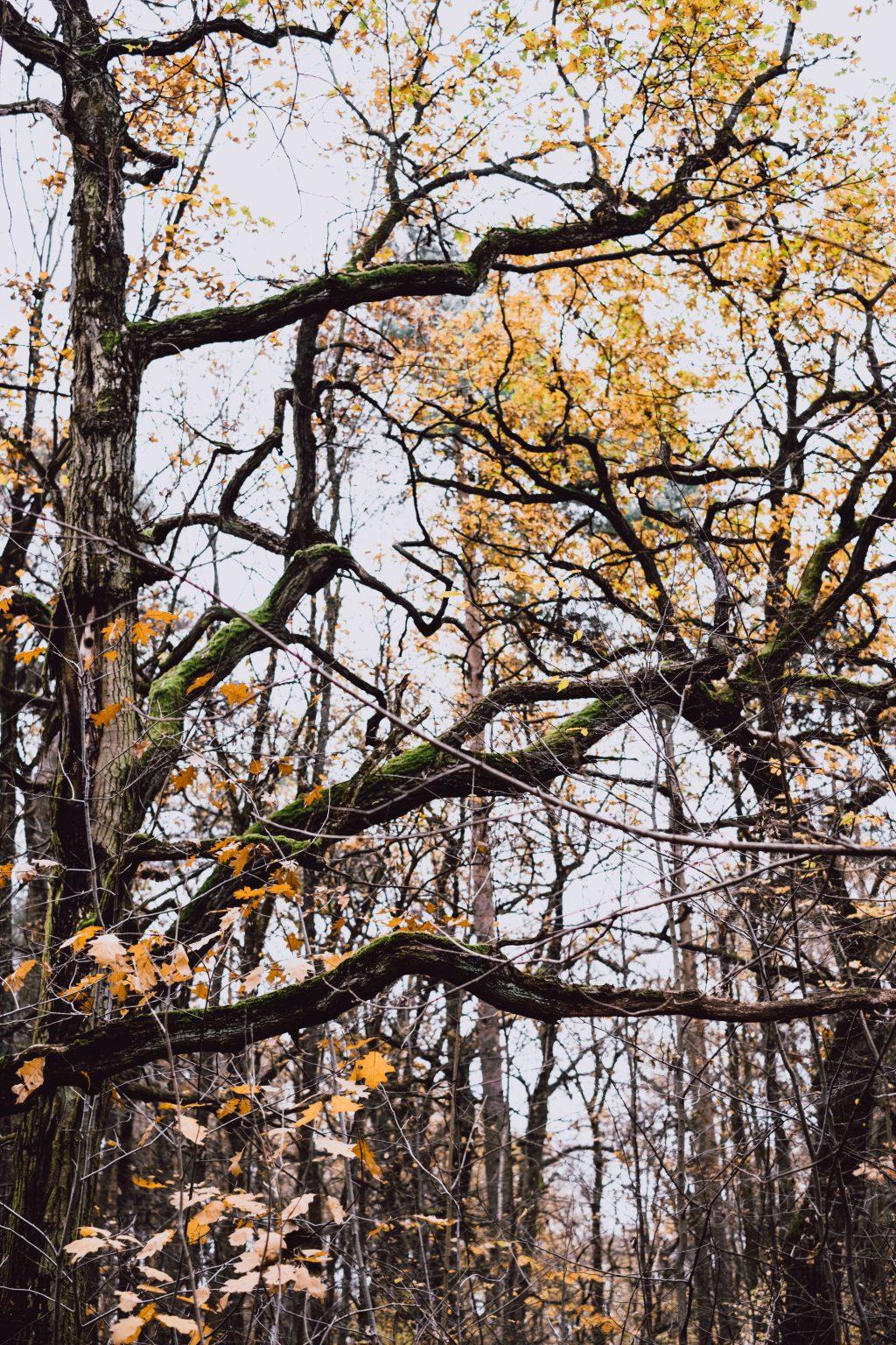 Autumn forest 2 - free stock photo