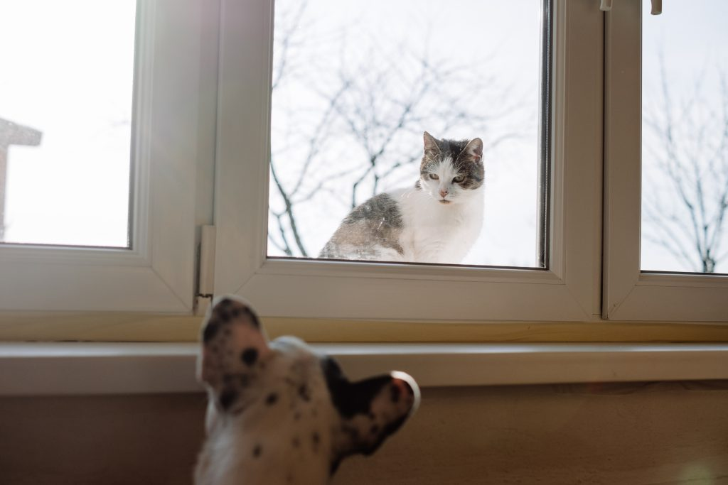 Cat and dog stare off - free stock photo