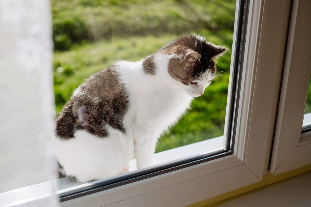 Cat looking through the window from the outside - free stock photo