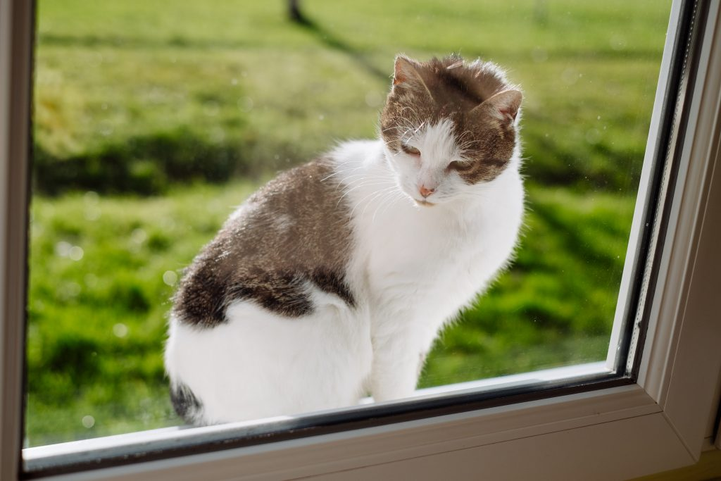 Cat looking through the window from the outside 2 - free stock photo