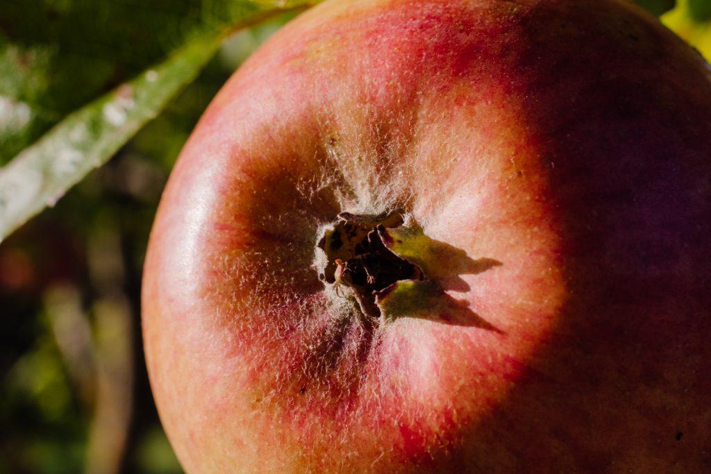 Closeup of an apple - free stock photo