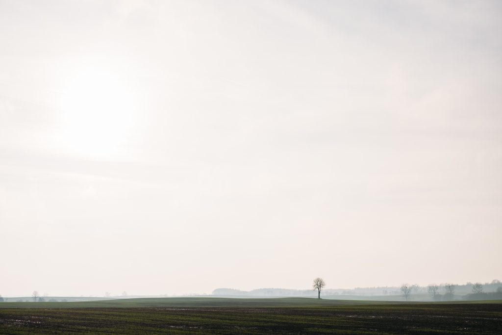 Lonely tree in the field - free stock photo