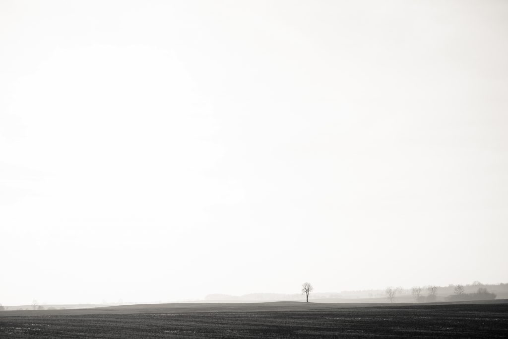Lonely tree in the field in black and white - free stock photo