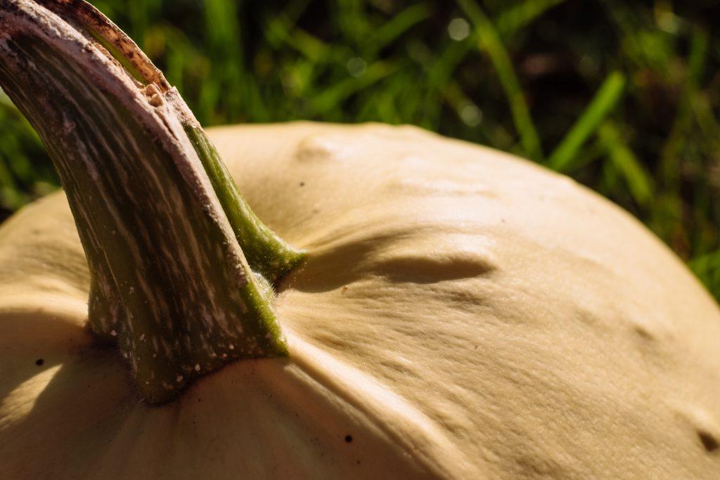 Pale yellow pumpkin closeup 4 - free stock photo