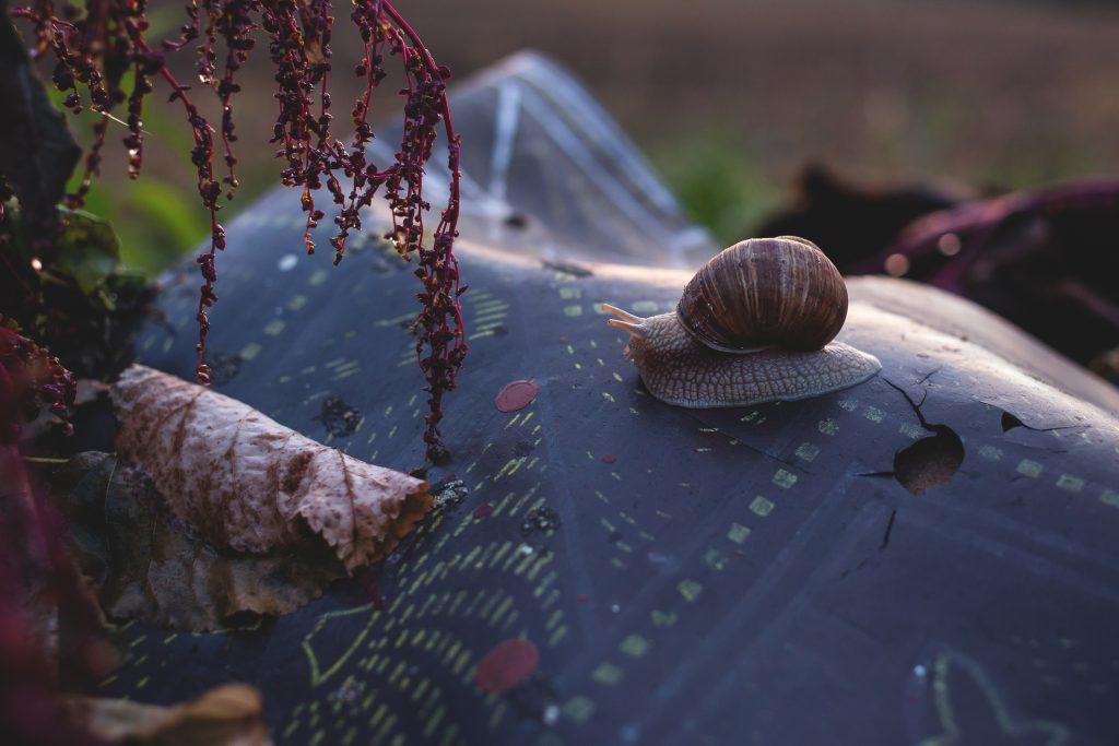 Snail on a piece of trash - free stock photo