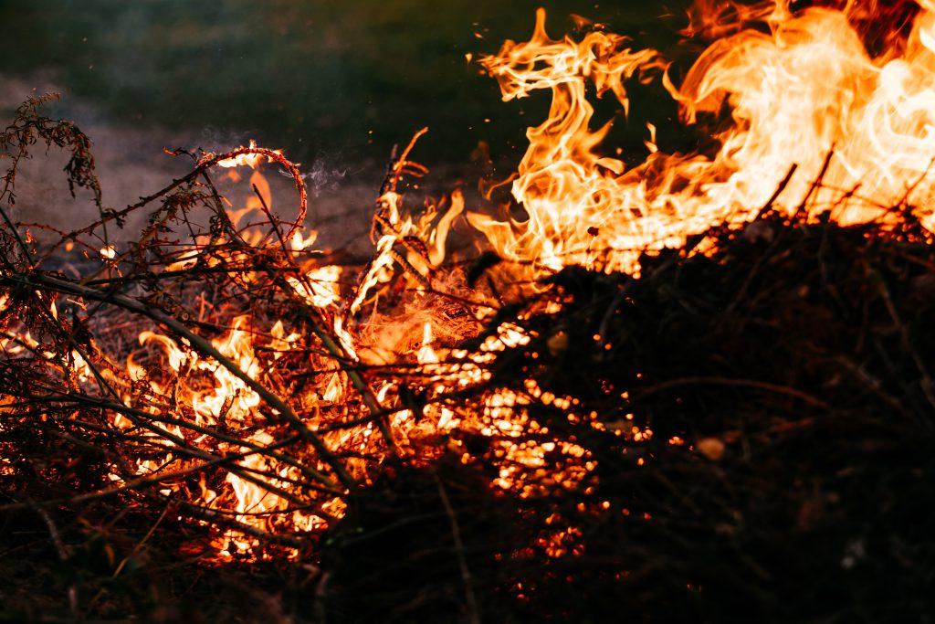 Bonfire flames 2 - free stock photo