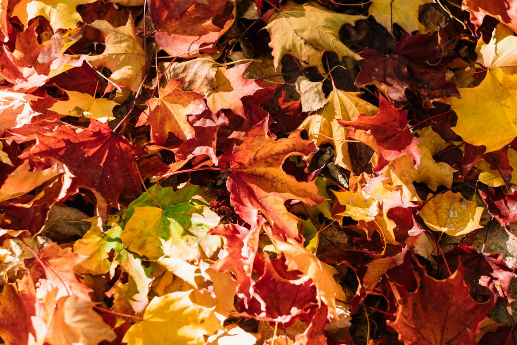 Colourful autumn leaves - free stock photo