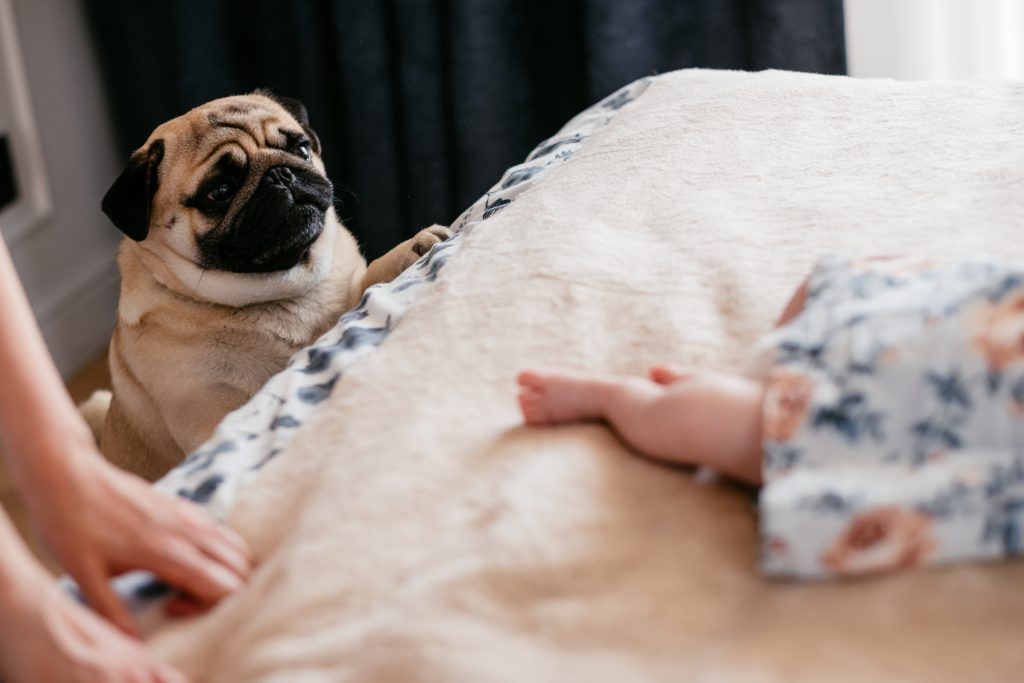 A curious pug looking at a baby sleeping on the bed - free stock photo
