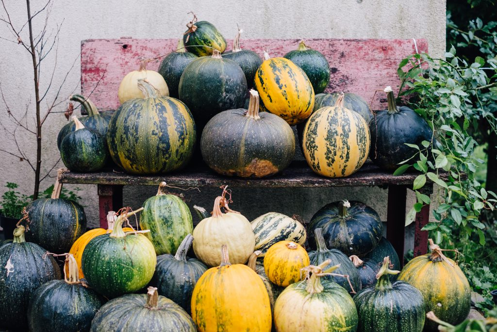 A pile of pumpkins on an old bench - free stock photo