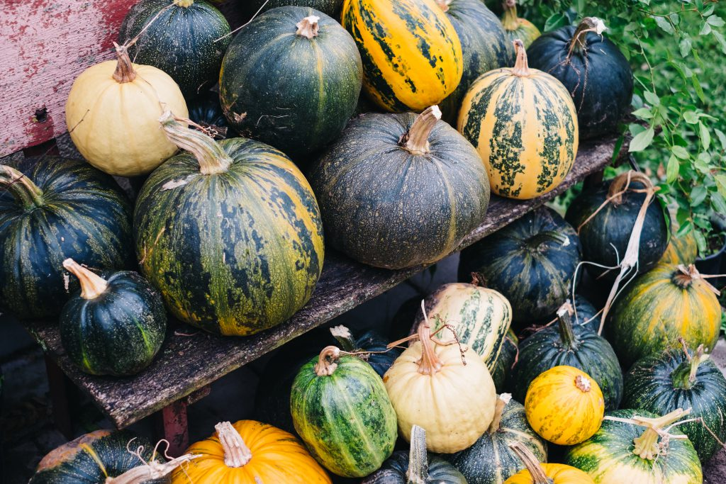 A pile of pumpkins on an old bench 2 - free stock photo