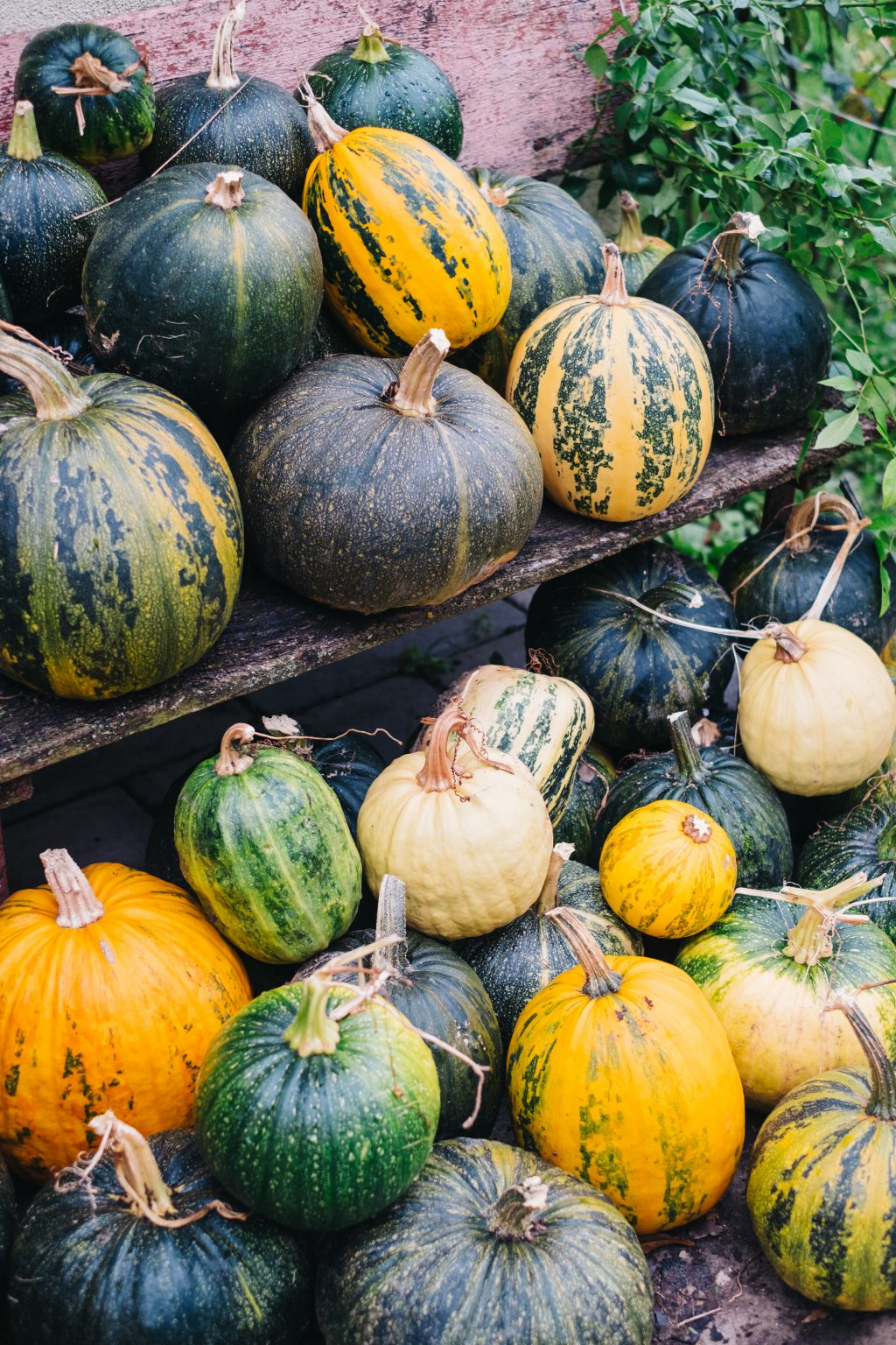 A pile of pumpkins on an old bench 3 - free stock photo