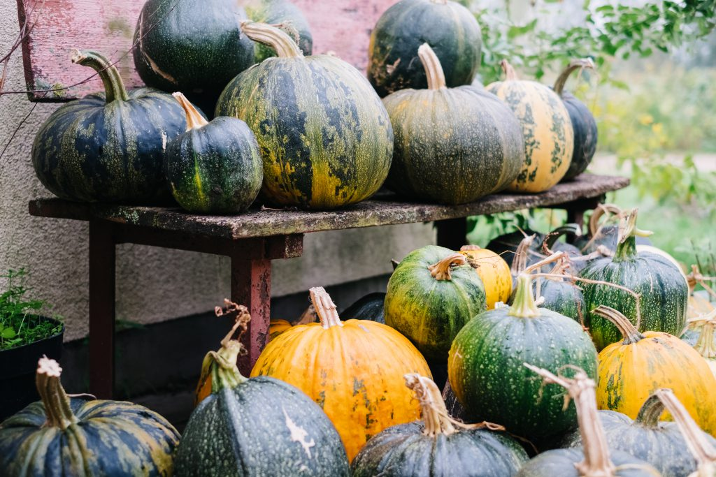 A pile of pumpkins on an old bench 4 - free stock photo