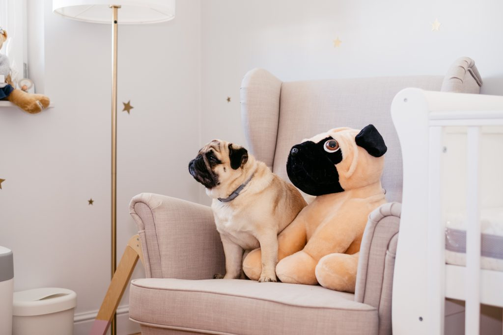 A pug sitting in an armchair in a nursery room - free stock photo